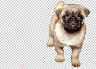 Photoshop|背景を透明にするのはこんなに簡単!手順を1から解説します
